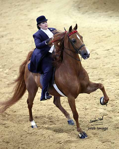 Jenna Dixon Tangled Dreams Chattanooga Charity Horse Show 2017