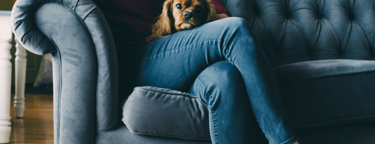 Blue Couch With Lap Dog | Relax at Home | DRA Homes