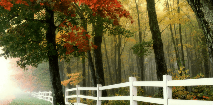 Fall fenceline | Home for Fall | DRA Homes
