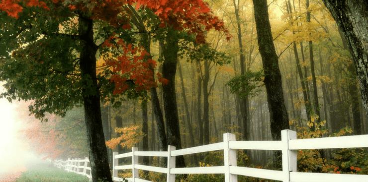 Fall fenceline | Home for Fall | DRA Homes