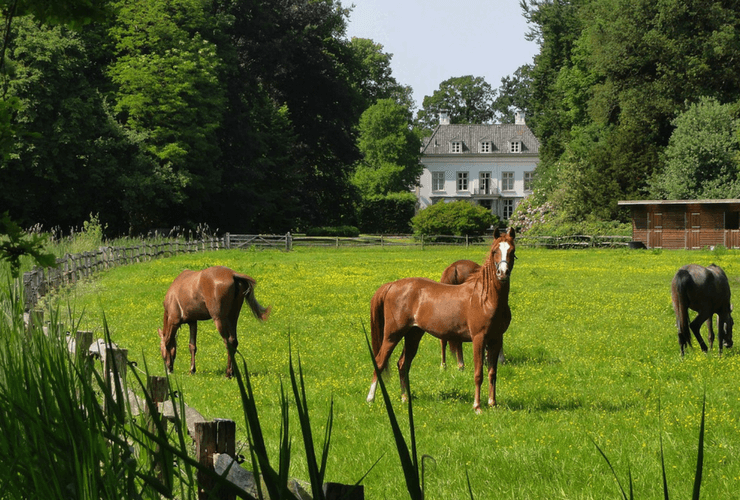 Horses in a field in front of farmhouse DRA Homes Slider