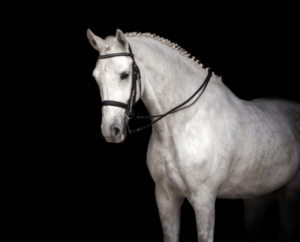 Horse Farms for Sale in Cobb County _ Jenna Dixon _ Equestrian Property For Sale