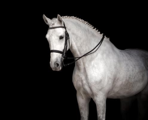 Horse Farms for Sale North Georgia _ Jenna Dixon _ Equestrian Property For Sale